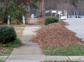 Leaf should be piled on the curb of the street, but not on the street