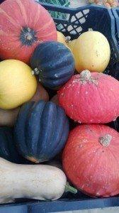 Accorn squash at the Hollywood Farmers Market