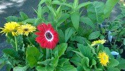 hfm_flower